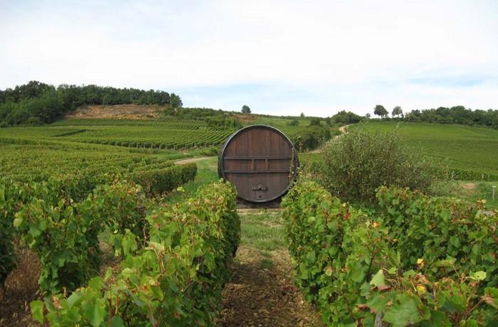 Vue vigne Aladame